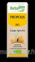 Herbalgem Propolis large spectre Solution buvable bio Fl cpte-gttes/15ml à La Ricamarie