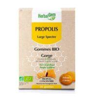 Herbalgem Propolis large spectre Gomme bio B/24 à La Ricamarie